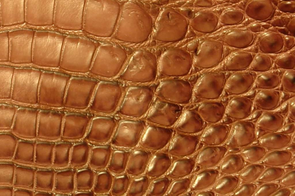 рисунок кожи крокодила один самых скандальных